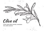 Hand drawn vector illustration - Olive branch. Olive oil. Vintage