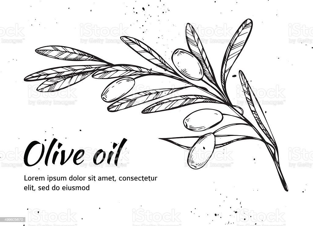 Hand drawn vector illustration - Olive branch. Olive oil. Vintage vector art illustration