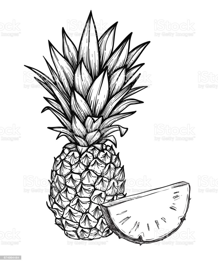 Hand Drawn Vector Illustration Pineapple Exotic Tropical