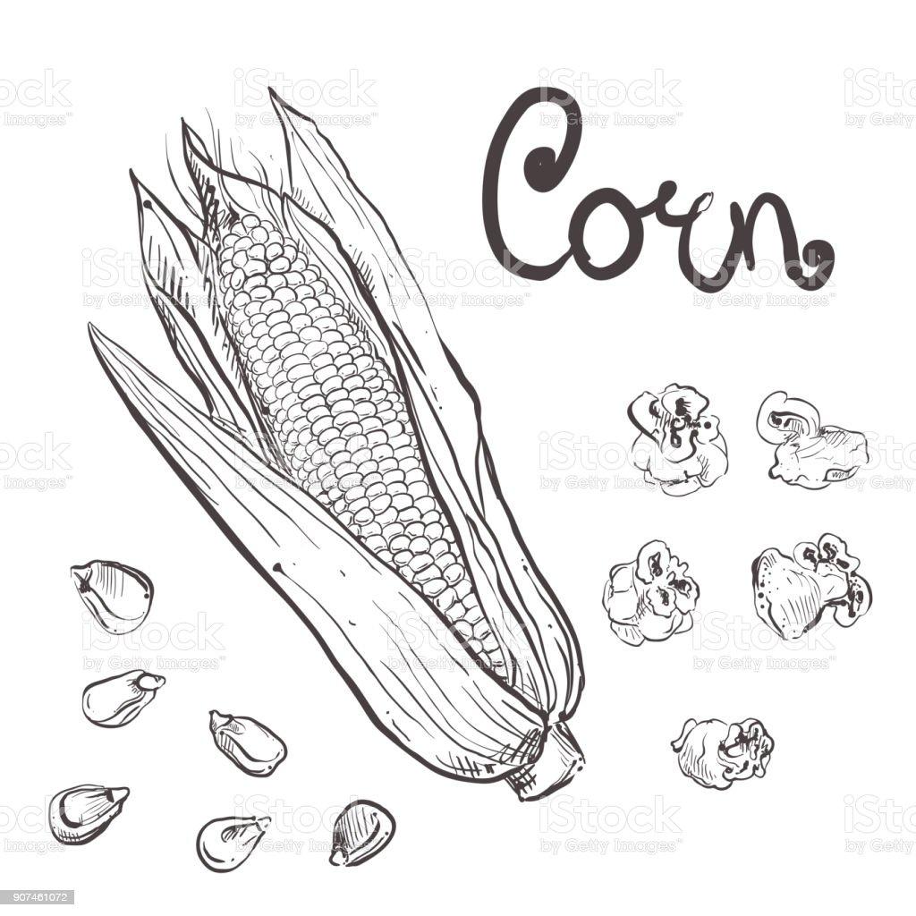 Hand Drawn Vector Illustration Set Of Black Corn Grain Popcorn ...
