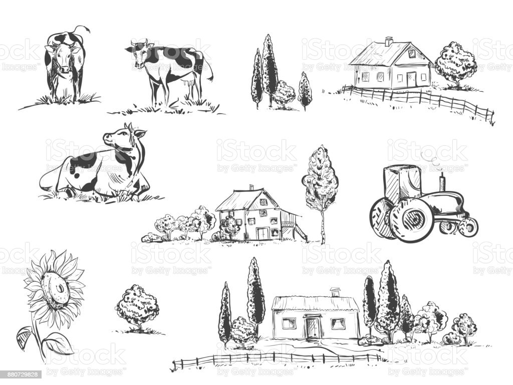 hand drawn vector illustration set with farm and cow, sunflowers. sketh. vector art illustration
