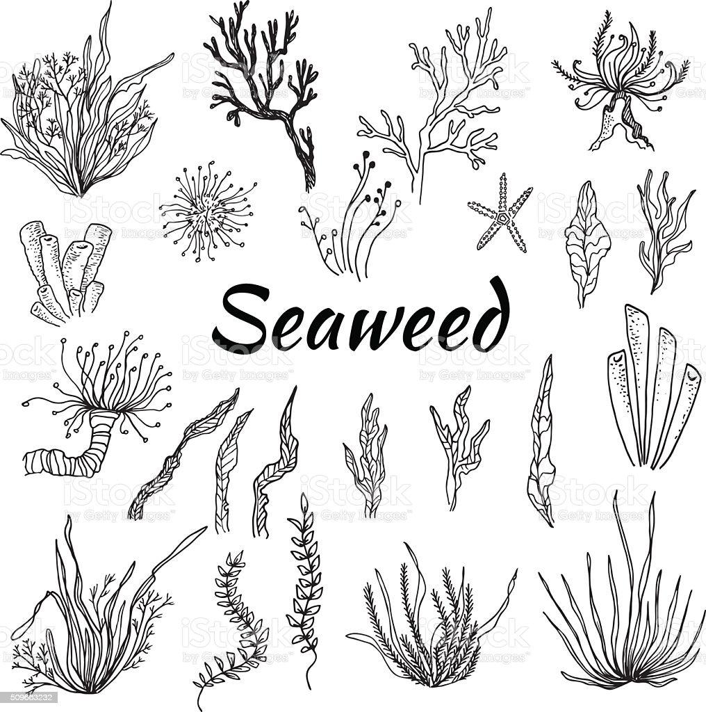 Dibujado a mano-ilustración de vectores juego con algas marinas. Boceto - ilustración de arte vectorial