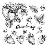 Hand drawn vector illustration - Strawberry set