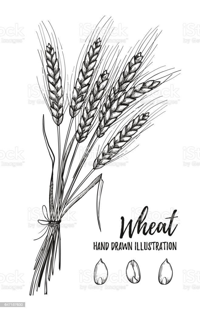 Royalty Free Wheat Sta...