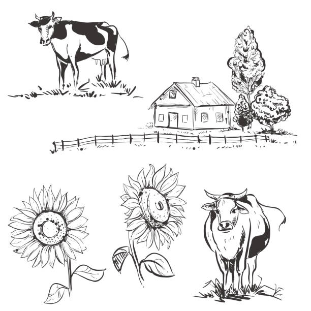 hand drawn vector illustration with farm and cow, sunflowers. sketh. vector art illustration