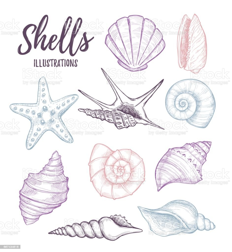 Hand drawn vector illustrations - collection of seashells.  Marine set. Perfect for invitations, greeting cards, posters, prints, banners, flyers etc vector art illustration