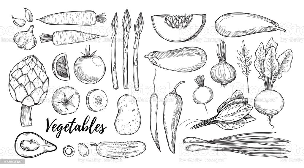 Hand drawn vector illustrations - collection of vegetables (carrots, potatoes, garlic, tomatoes, asparagus, artichoke, pumpkin, spinach). Design elements in sketch style. Perfect for posters, packing, restourant menu, brochures, flyers vector art illustration