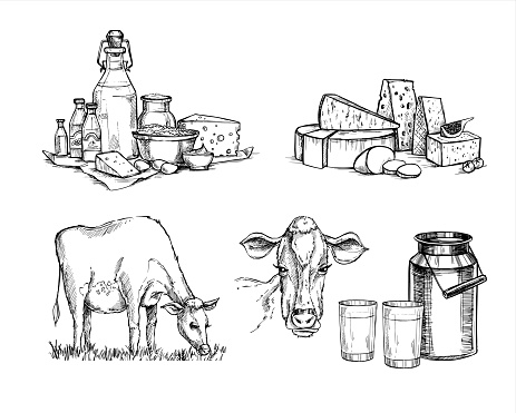 Hand drawn vector illustrations. Milk farm. Cheese and milk set (mozzarella, blue cheese, gouda, parmesan, maasdam). Design elements in sketch style. Perfect for packaging, menu, cards