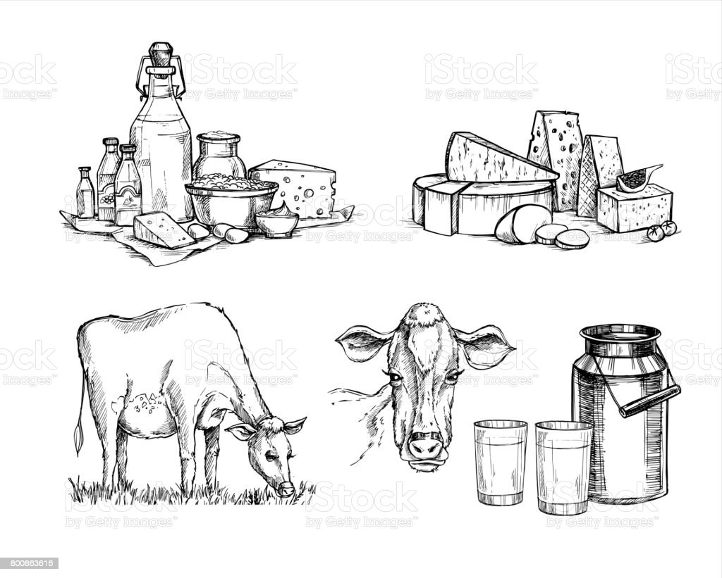 Hand drawn vector illustrations. Milk farm. Cheese and milk set (mozzarella, blue cheese, gouda, parmesan, maasdam). Design elements in sketch style. Perfect for packaging, menu, cards vector art illustration
