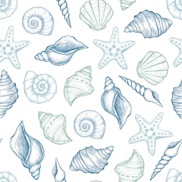hand drawn vector illustrations - seamless pattern of seashells.  marine background. perfect for invitations, greeting cards, posters, prints, banners, flyers etc - seashell stock illustrations, clip art, cartoons, & icons