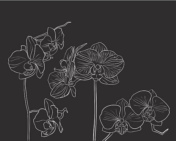 Hand drawn vector orchid on black Hand drawn orchid flower on black background orchid stock illustrations