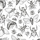 Hand drawn vector pattern with insects in different poses. Moth, butterfly, bee, bumblebee, ladybug. Vector collection. Detailed realistic sketches. Ink, pen, linework.