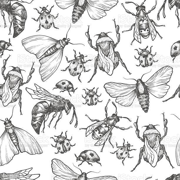 Hand drawn vector pattern with insects in different poses vector id636189030?b=1&k=6&m=636189030&s=612x612&h=ruqschsyjkpo3knm14rqj0yltrt6pp2oitokqqi4oxk=