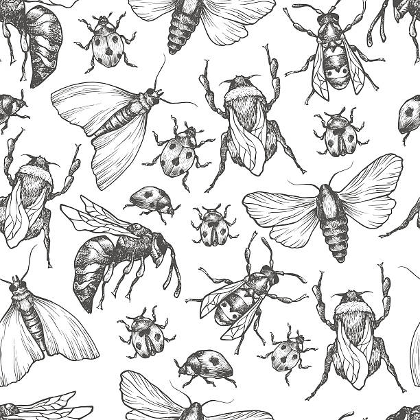 ilustraciones, imágenes clip art, dibujos animados e iconos de stock de hand drawn vector pattern with insects in different poses. - insecto