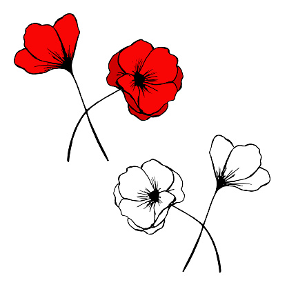Vector illustration of hand drawn poppies doodle.