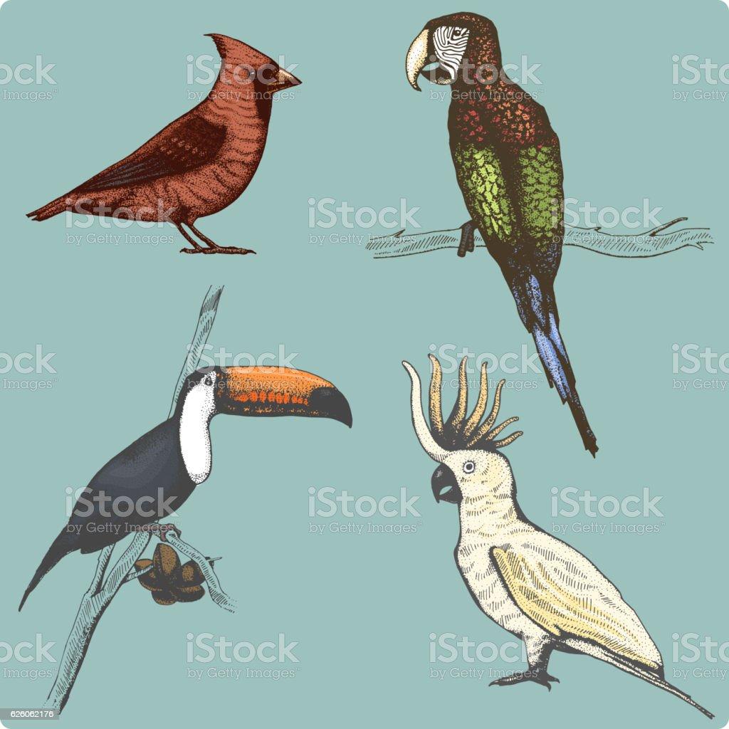 hand drawn vector realistic bird, sketch graphic style, vector art illustration