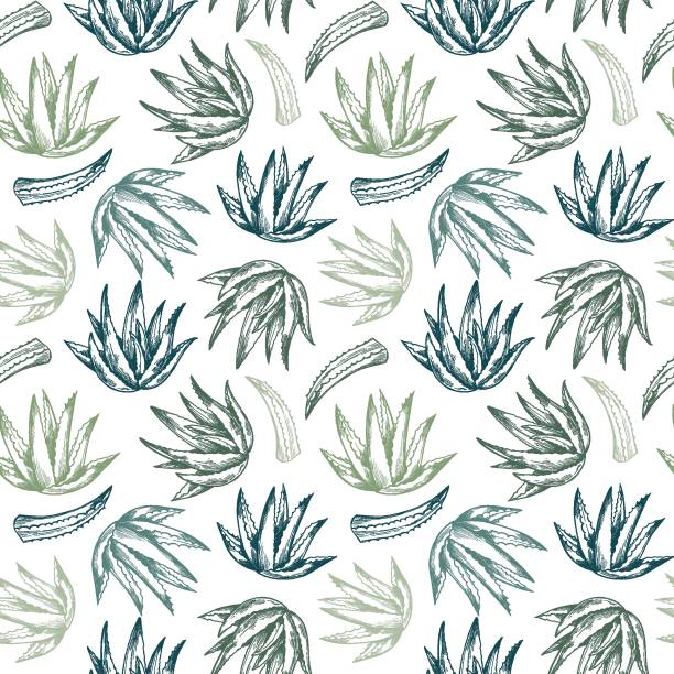 hand drawn vector seamless pattern. aloe vera. herbal background in sketch style. perfect for cosmetics labels, invitations, cards, leaflets etc - aloe vera stock illustrations