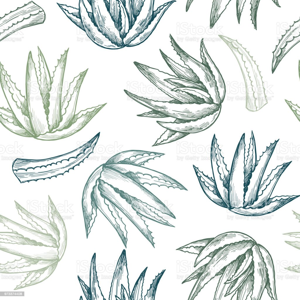 Hand drawn vector seamless pattern. Aloe vera. Herbal Background in sketch style. Perfect for cosmetics labels, invitations, cards, leaflets etc vector art illustration