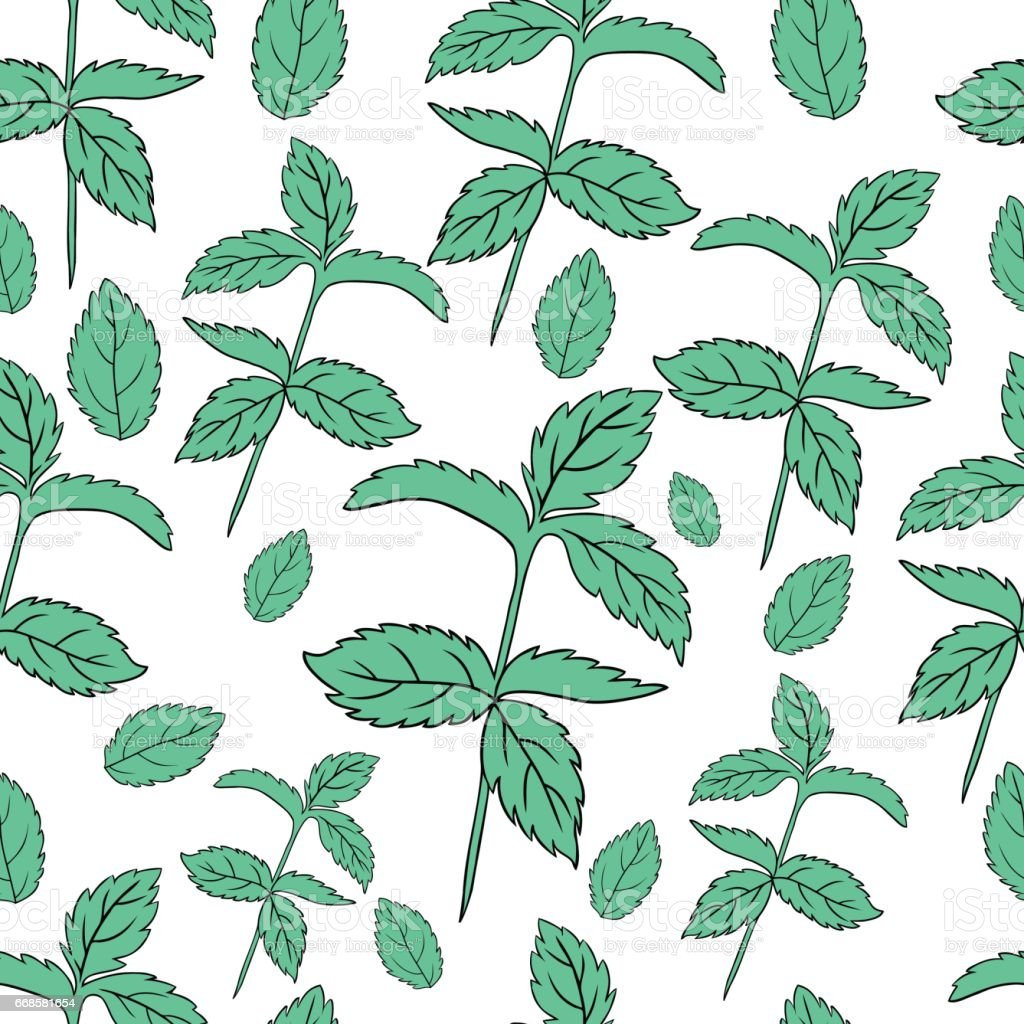 Hand Drawn Vector Seamless Pattern With Mint Leaves Peppermint Spicy ...