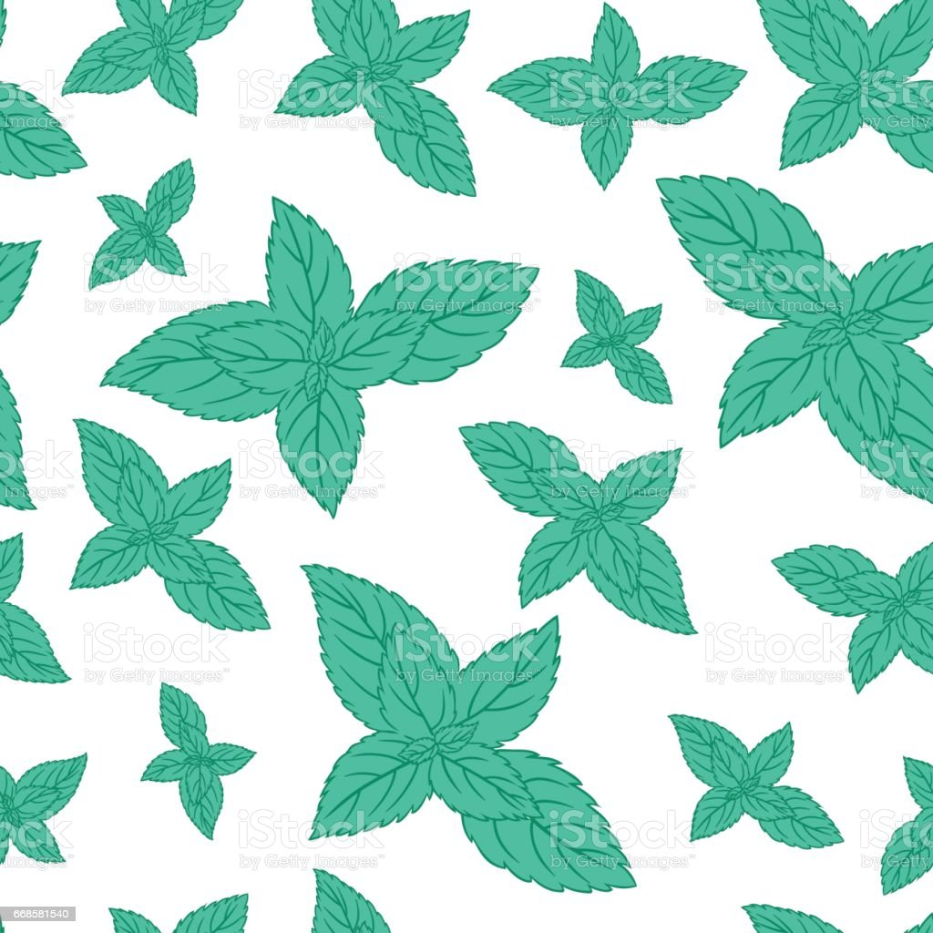 Hand Drawn Vector Seamless Patterns With Mint Leaves Peppermint ...