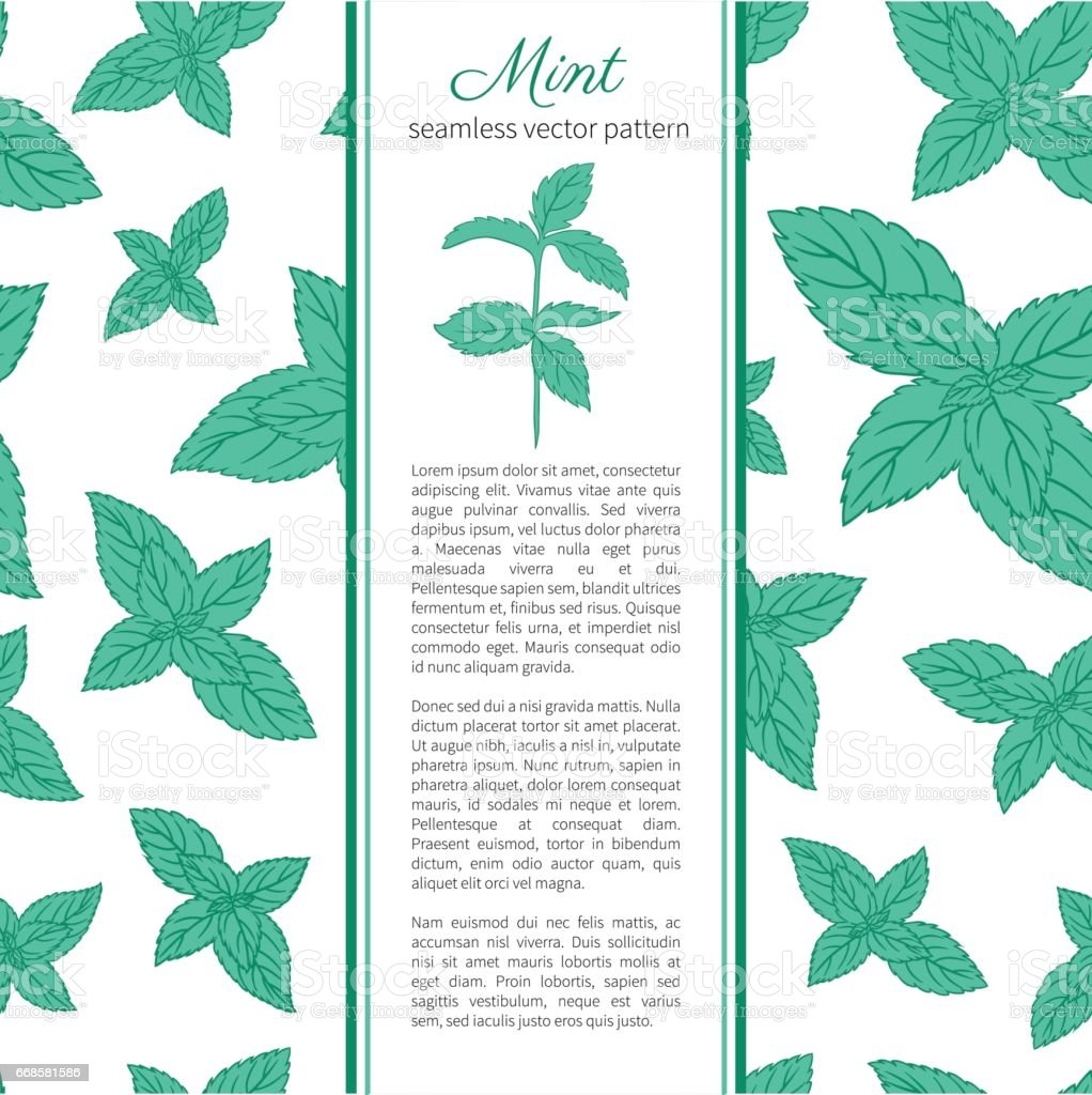 Hand Drawn Vector Seamless Patterns With Mint Leaves Peppermint