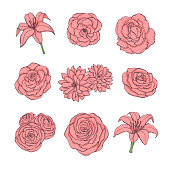 Hand drawn vector set of pink rose, lily, peony and chrysanthemum flowers contour isolated on the white background. Vintage floral decoration.
