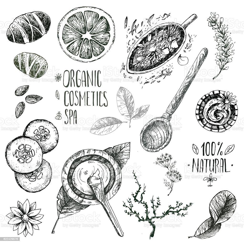 Hand drawn vector set, organic cosmetics, spa. Natural herbal pr vector art illustration