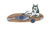 Hand drawn vector stock abstract graphic cartoon illustration with lying husky dog on carpet isolated on white background.