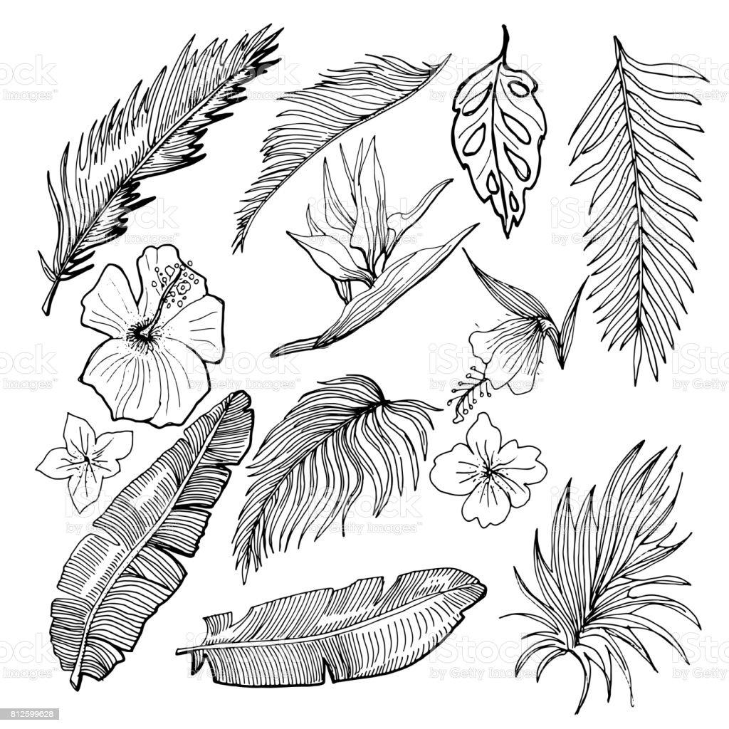 Handgezeichnete Vektor tropischen Set. Banane und Palmblättern und tropischen Blumen.  Kontur zeichnen. Schwarz und weiß-Abbildung. – Vektorgrafik