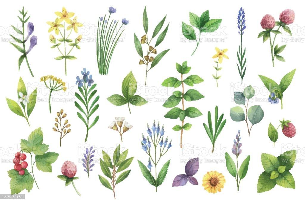 Set aquarelle de vector dessinés à la main des herbes et des épices. - Illustration vectorielle