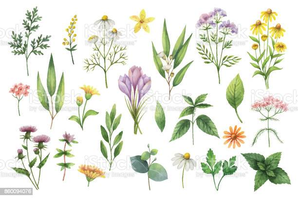 Hand drawn vector watercolor set of herbs and spices vector id860094076?b=1&k=6&m=860094076&s=612x612&h=fcehfn1qnbahul56w4xiii9tqdg3eyeuzuwcw4dcyuo=