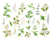 Hand drawn vector watercolor set green herbs and spices. Floral background for design of natural food, kitchen, market, textiles, decorations, cards.