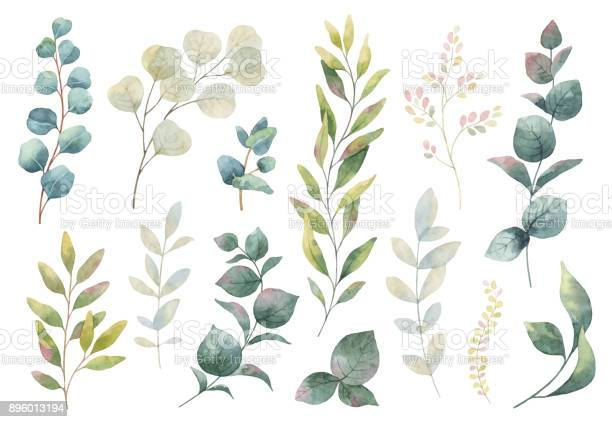 Hand drawn vector watercolor set of herbs wildflowers and spices vector id896013194?b=1&k=6&m=896013194&s=612x612&h=g0cnzmthnggfevlk ppxsfpviqw5k5ot zpbnzp hw4=