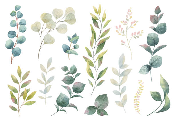Hand drawn vector watercolor set of herbs, wildflowers and spices. Hand drawn vector watercolor set green herbs, wildflowers and spices. Floral background for design of natural food, kitchen, market, textiles, decorations. Beautiful rustic card on white backdrop. lush foliage stock illustrations