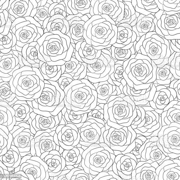 Hand drawn vector white roses seamless pattern floral ornament for vector id1067054308?b=1&k=6&m=1067054308&s=612x612&h=rzbxyuyhrc0babg8tt8vzempvxnsaxc6tskjy1lnfaa=