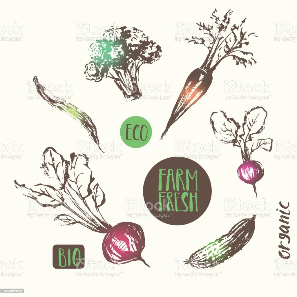 Hand drawn vegetable sketch vintage style. vector art illustration