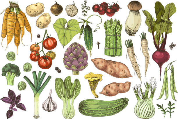 Hand drawn vegetables collection Colorful hand drawn vegetables collection. 35 highly detailed elements. Vector illustration artichoke stock illustrations