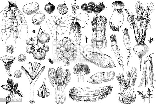 Hand drawn vegetables collection. 35 highly detailed elements. Vector illustration