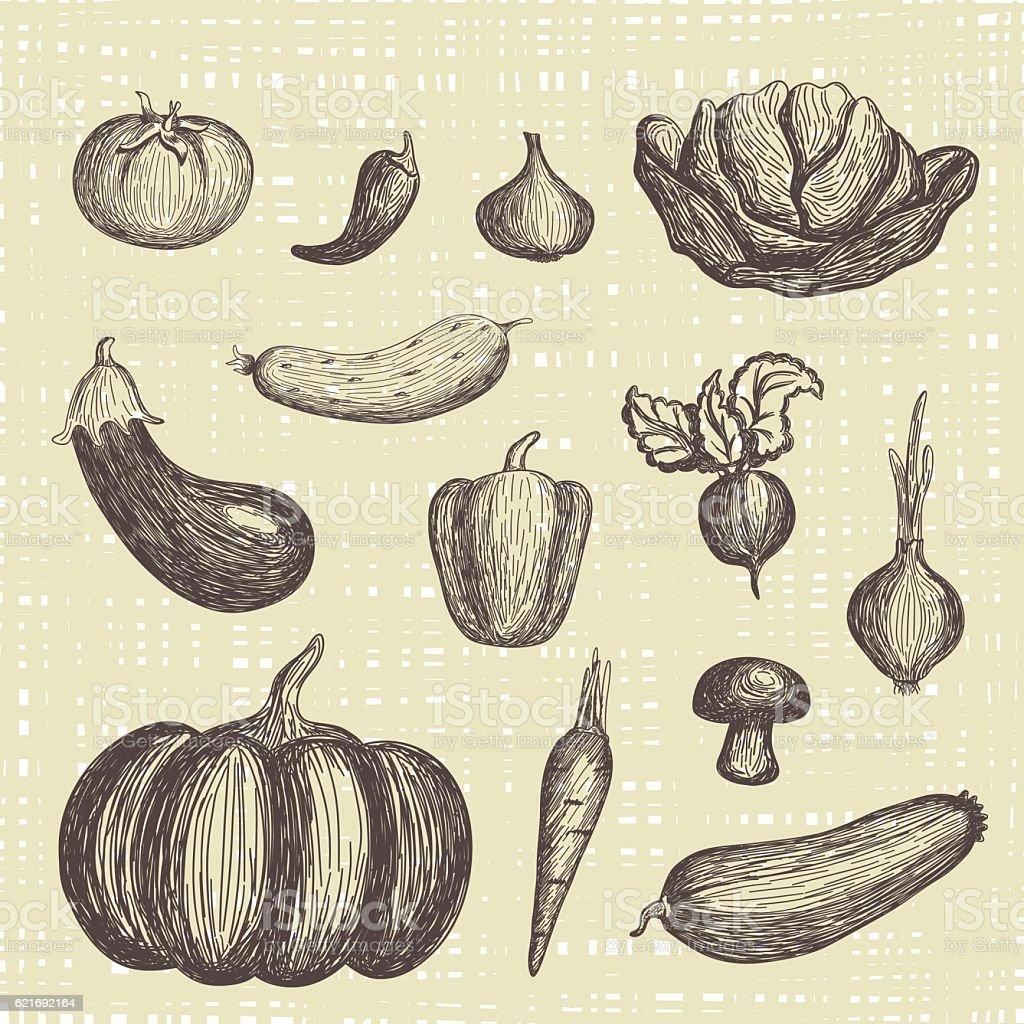 Hand drawn vegetables set vector art illustration