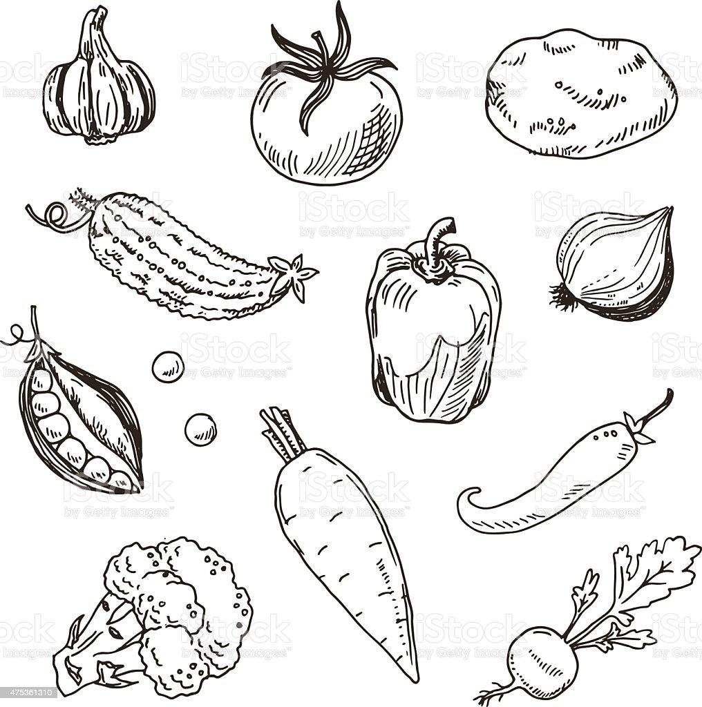 Hand drawn vegetables sketch set vector art illustration