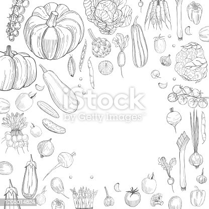 Hand drawn vegetables on white background.  Vector background