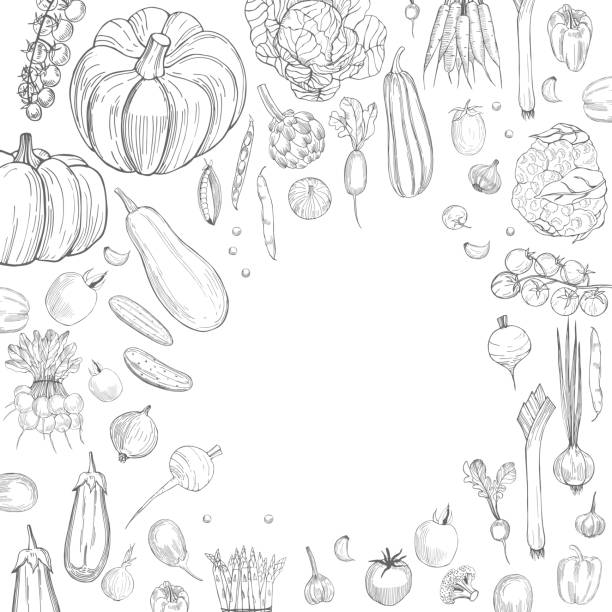 Hand drawn vegetables.  Vector background Hand drawn vegetables on white background.  Vector background crucifers stock illustrations