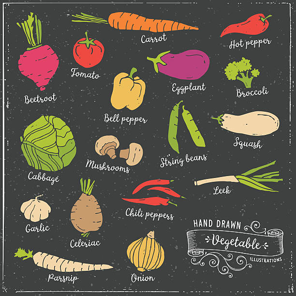 Hand Drawn Vegetables Hand drawn vegetables. Layered and global colors used. squash vegetable stock illustrations