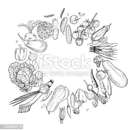 Hand drawn vegetables on white background.   Vector sketch  illustration.