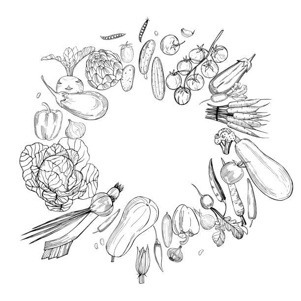 Hand drawn vegetables.   Vector  illustration. Hand drawn vegetables on white background.   Vector sketch  illustration. crucifers stock illustrations
