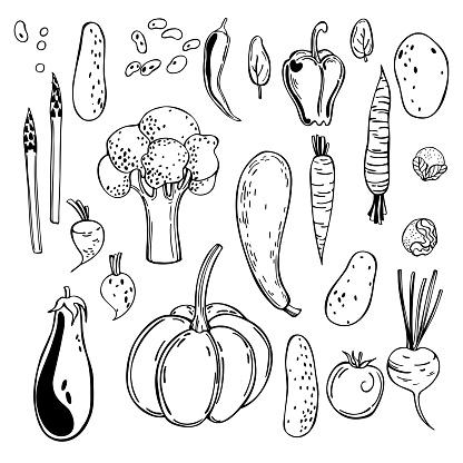 Hand drawn vegetables. Vector sketch  illustration.