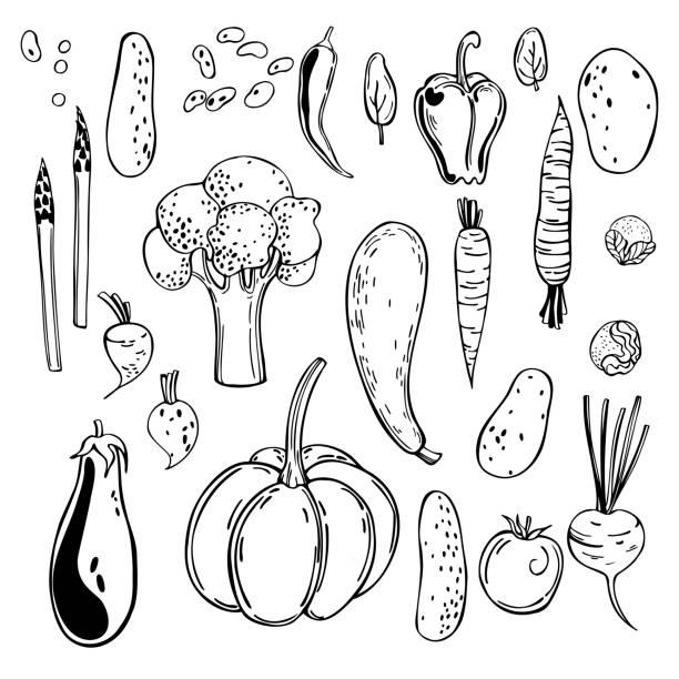Hand drawn vegetables. Vector  illustration. Hand drawn vegetables. Vector sketch  illustration. crucifers stock illustrations