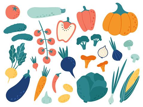 Hand drawn vegetables. Veggies nutrition doodle, organic vegan food and vegetable doodles vector illustration set