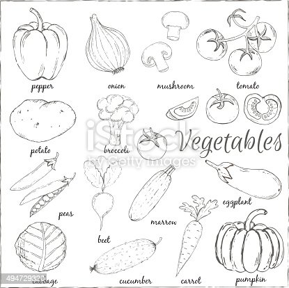 Hand Drawn Vegetables With Name Vector Illustration Stock