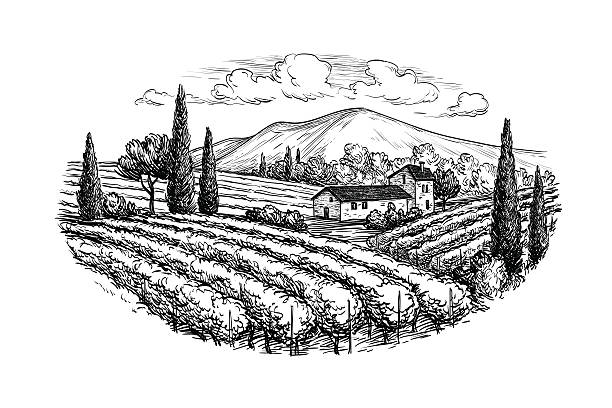 hand drawn vineyard landscape - black and white mountain stock illustrations, clip art, cartoons, & icons